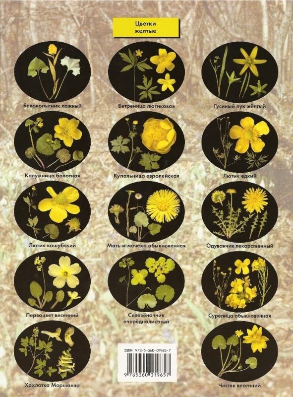 предназначены авто определитель луговых растений по фото нерв представляет